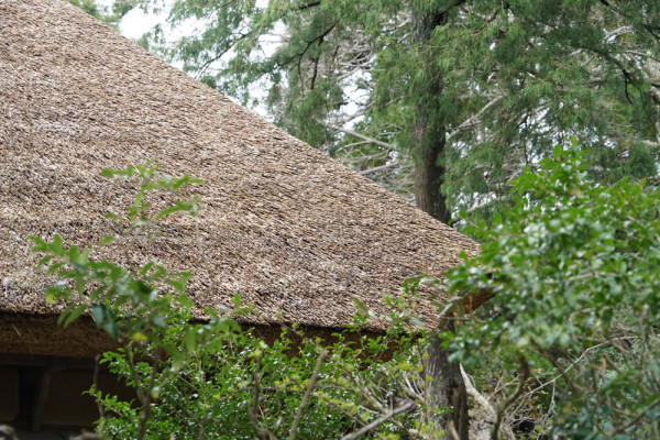 英彦山財蔵坊-茅葺の屋根