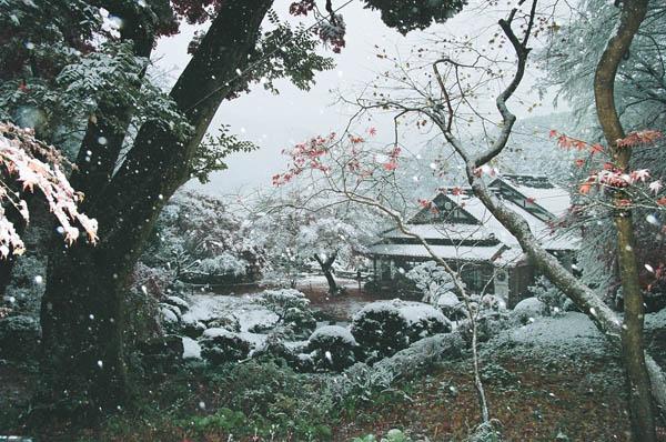 藤江氏 魚楽園 雪